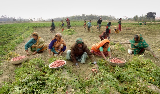 Urban Agriculture Planning or Rural Agriculture Planning